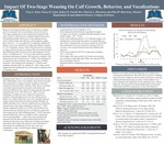 Impact Of Two-Stage Weaning On Calf Growth, Behavior, and Vocalizations