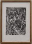 Winter Owl